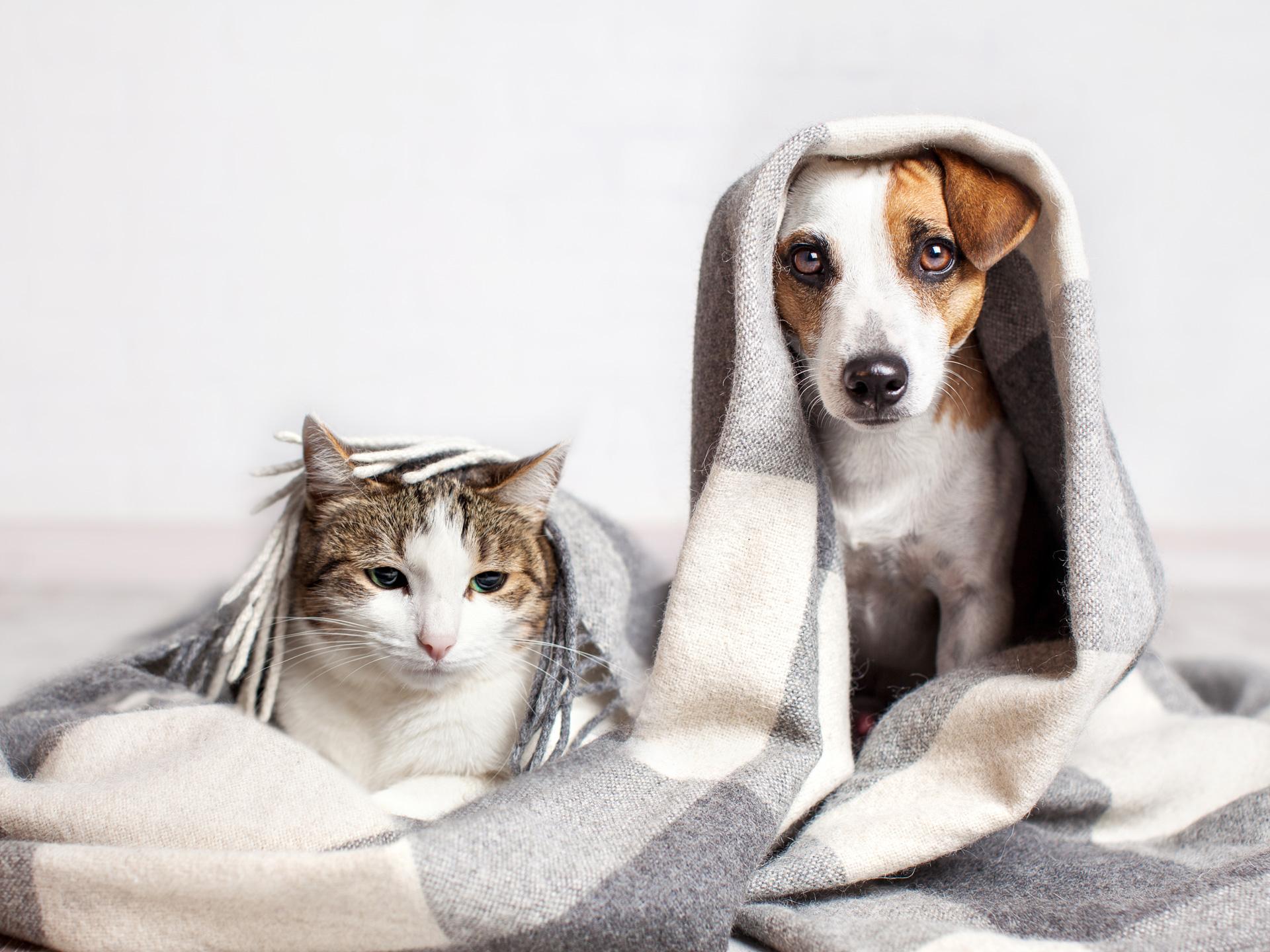 #Shoutout a los lugares pet friendly